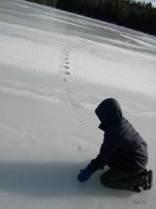 Frozen Deer Tracks