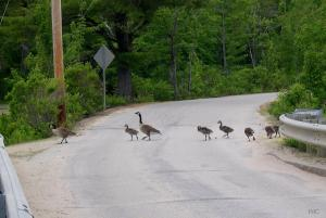 Family of 8 crosses the road