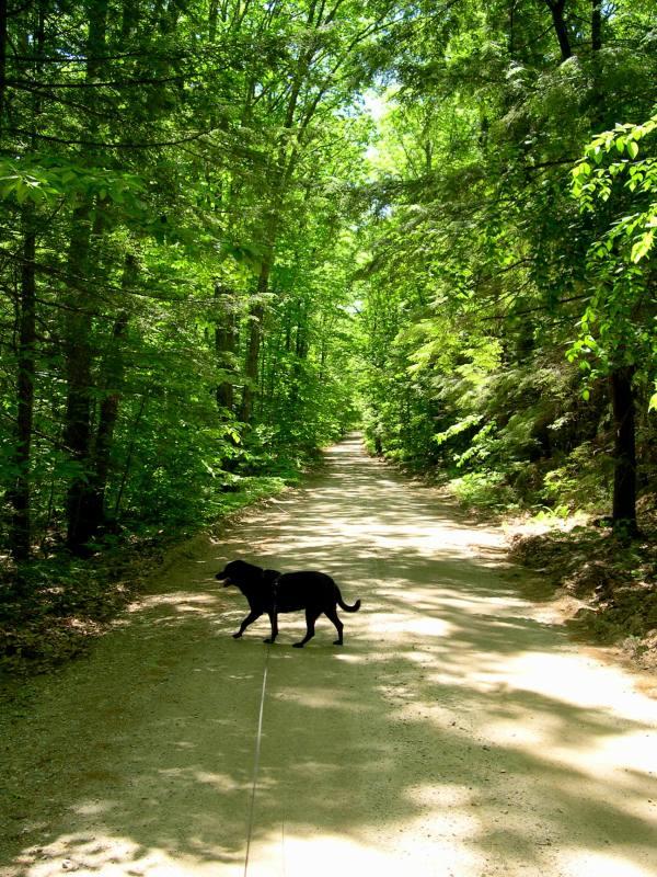 A nice walk