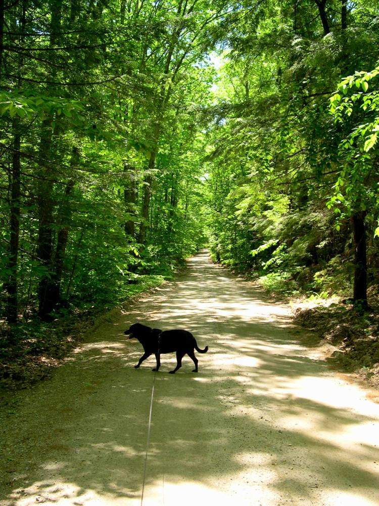 walking the dog in New Hampshire