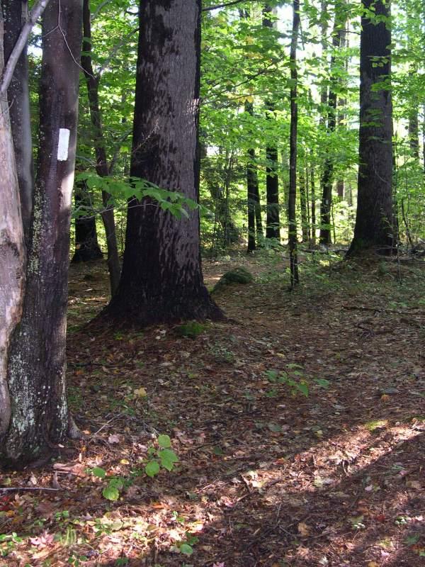 Trail & Trail Marker
