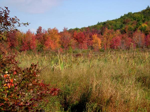 Cattails and Autumn Color