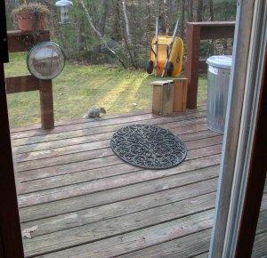 squirrel on porch