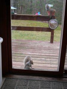 squirrel at door