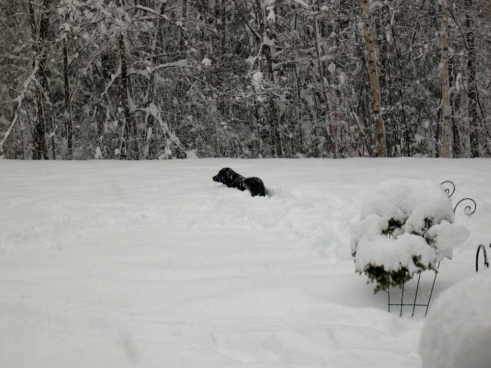 Roxy in the snow
