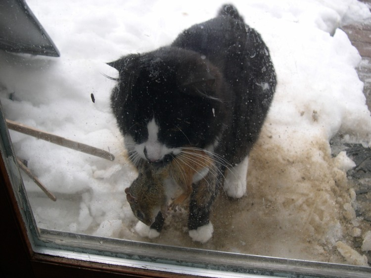 cat and squirrel prey