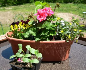 summer flower pot