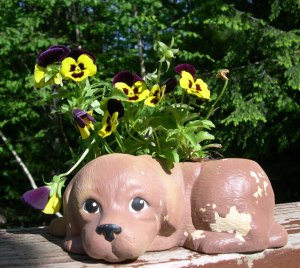 Pansy dog planter