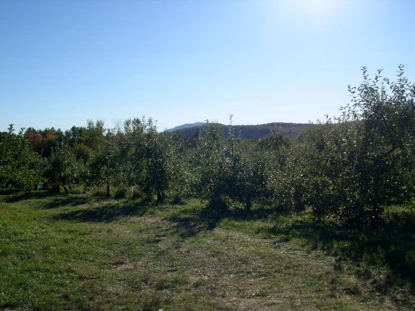 apple orchard and view of mt. monadnock