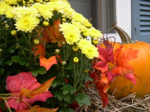 fall mums pumpkin