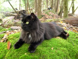 black cat on green moss
