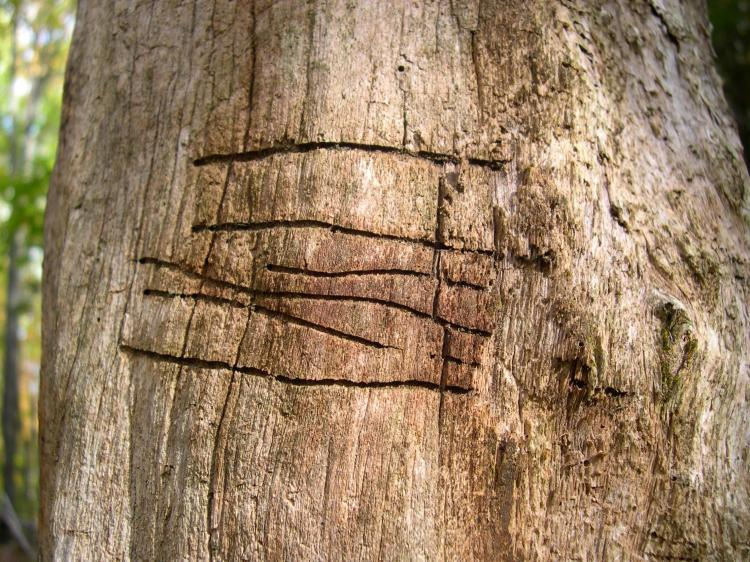 claw marks on a tree