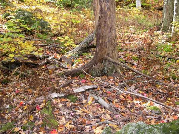 dead tree bark on the ground