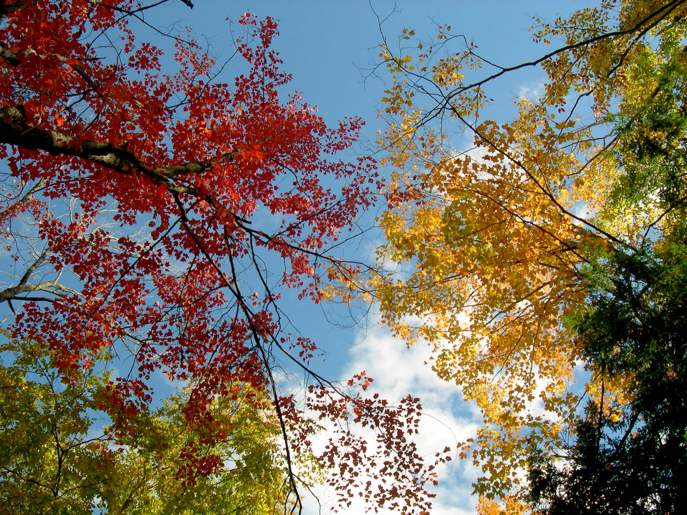 Fall leaves against a blue sky