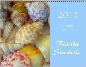 Florida seashells photography calendar