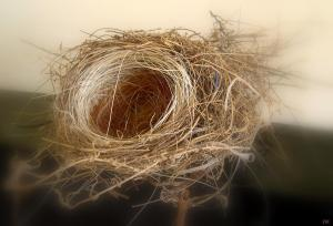 White Hair in Our Bird's Nest