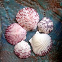 Pink and Purple Scallop Shells