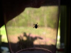 Tick in a glass