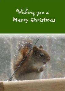 Cute red squirrel christmas card