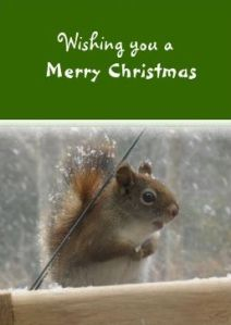Cute red squirrel christmas card