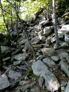 rocky trail through the woods