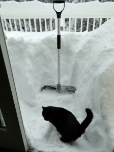 Snow shovel storm