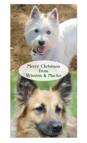 christmas cards from the pets