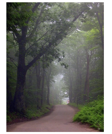 dirt road forest photo