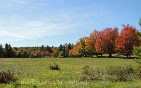 fall foliage, trees in a field