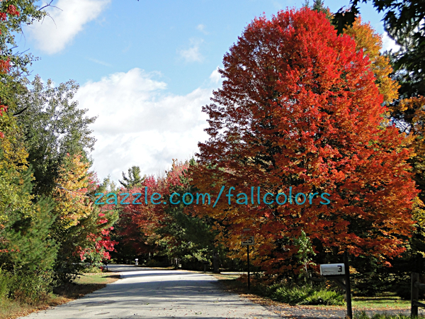 Pictures of Fall in New England 2015 (3/3)