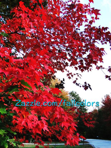 2015 Dark red leaves
