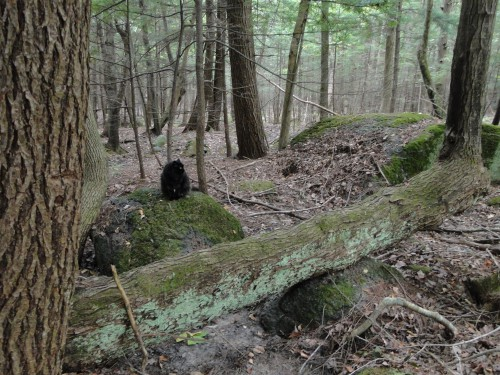 black cat in woods on rock