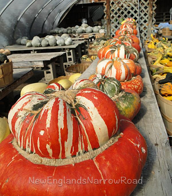 orange squash farm table