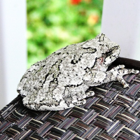 Visit From a New Hampshire Tree Frog