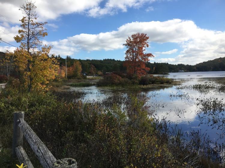Gregg Lake foliage and water