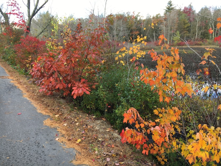 Fall foliage roadside in New Hampshire