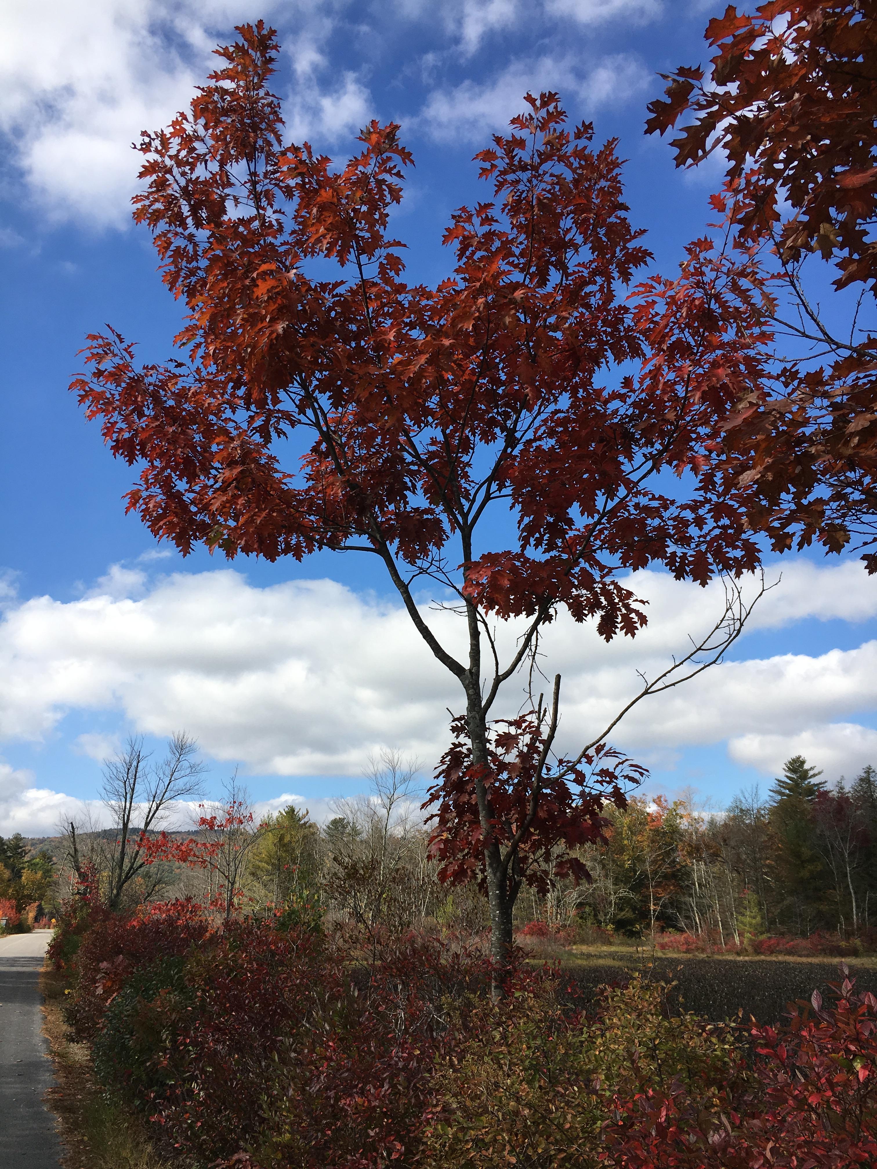 Fall leaves around the lake