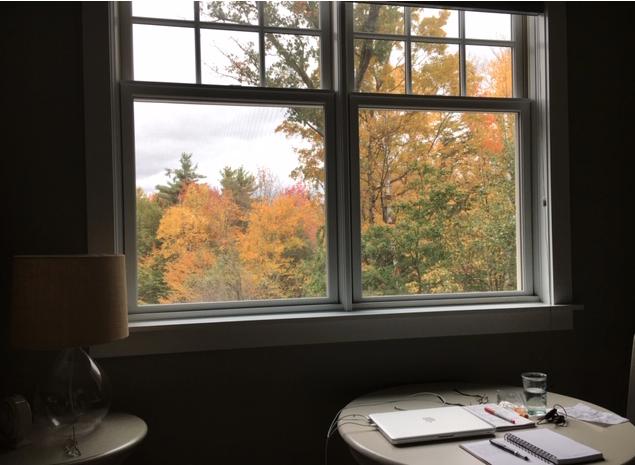 foliage view from my window
