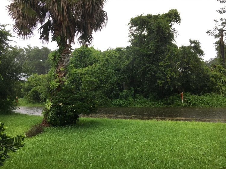 Florida standing water lawn palm tree