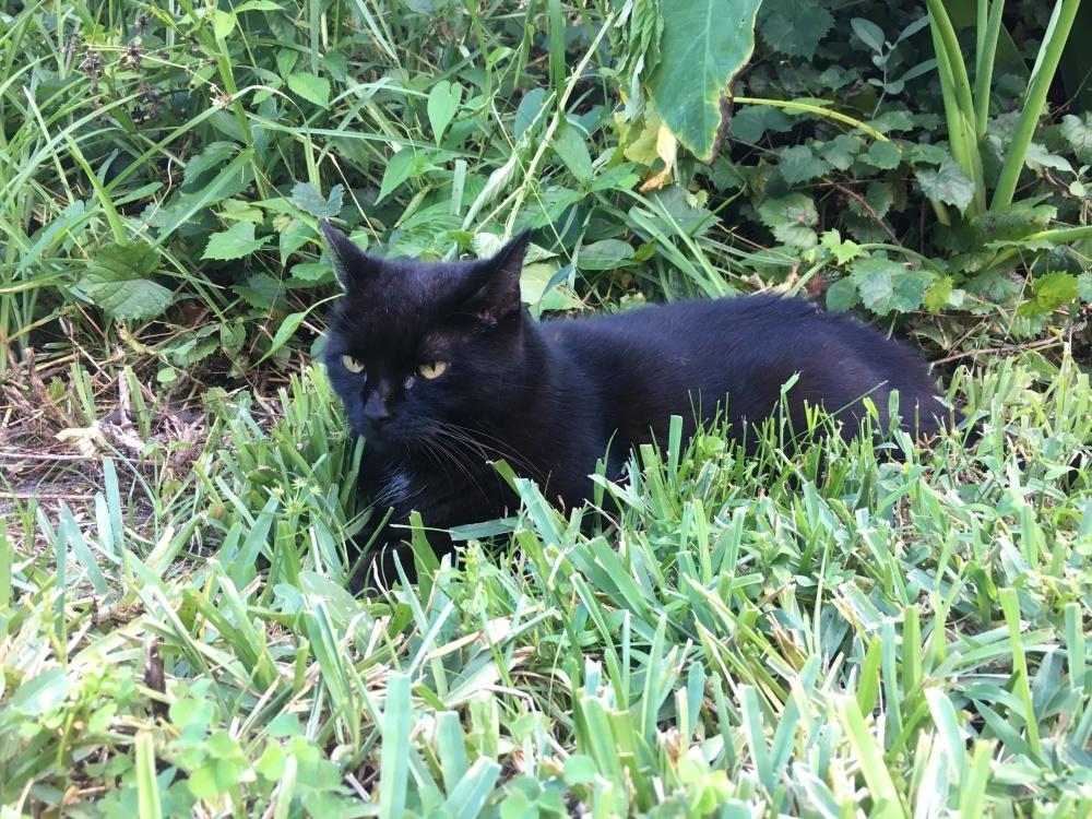 Skittle the black cat