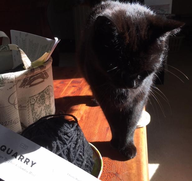 Black cat and Quarry yarn