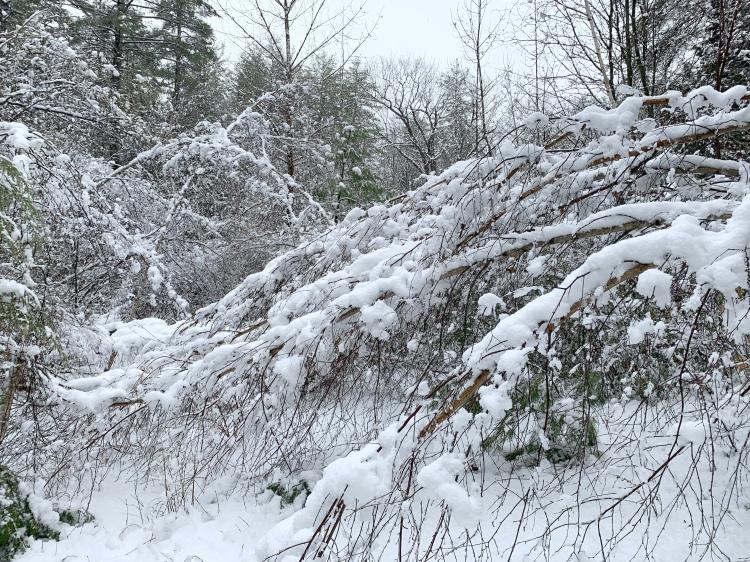 snowstorm April New Hampshire