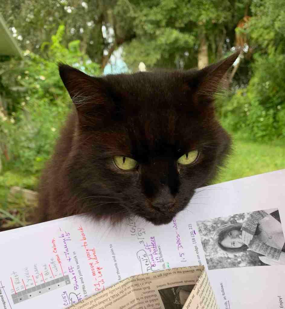 black cat, knitting basket, fontana