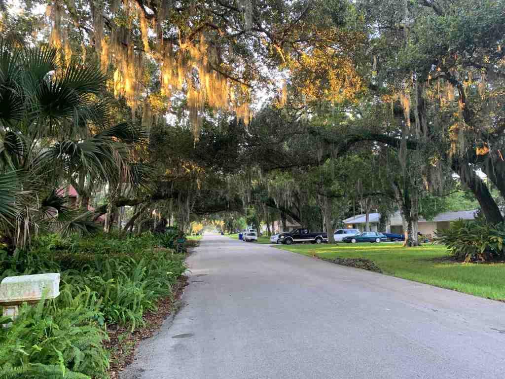 Florida neighborhood oak trees flat street